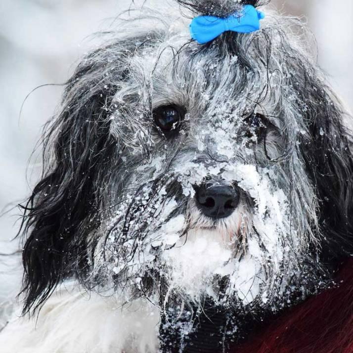 Malva b-kullen ett år leker i snön