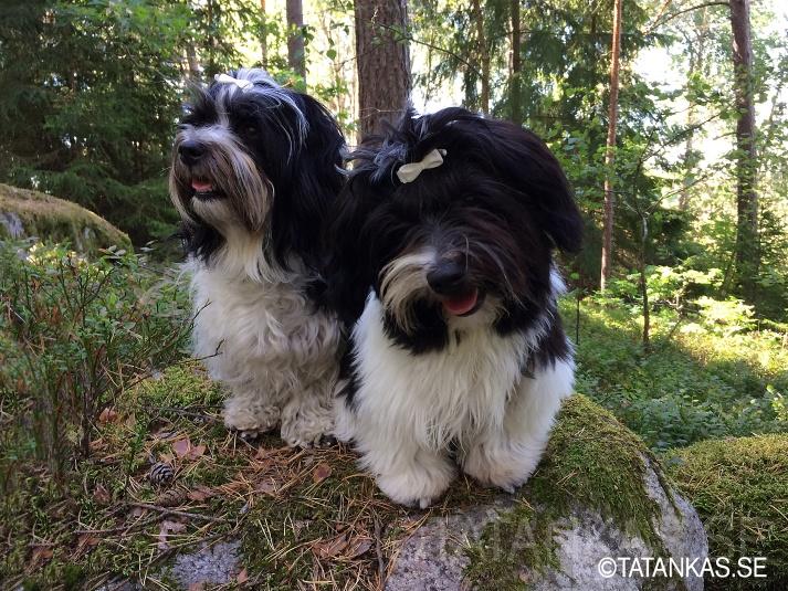 Näva och Beckie i skogen